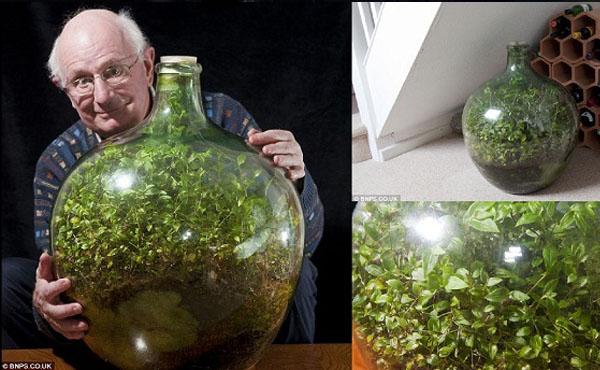 un jard n eterno en una botella tecnoartes net