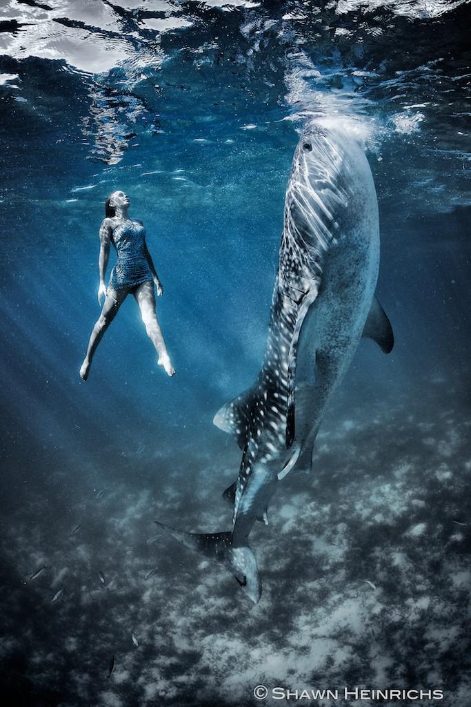 Shawn Heinrichs and Kristian Schmidt, photos under water