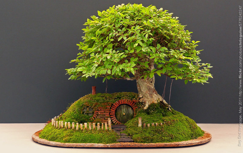 Bonsai hobbit tecnoartes net - Como cuidar un bonsai ...