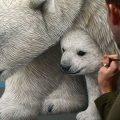 Osa polar con cachorros a la deriva