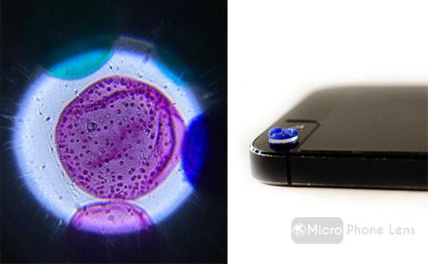 Convierte tu teléfono en un microscopio electrónico con estas diminutas lentes