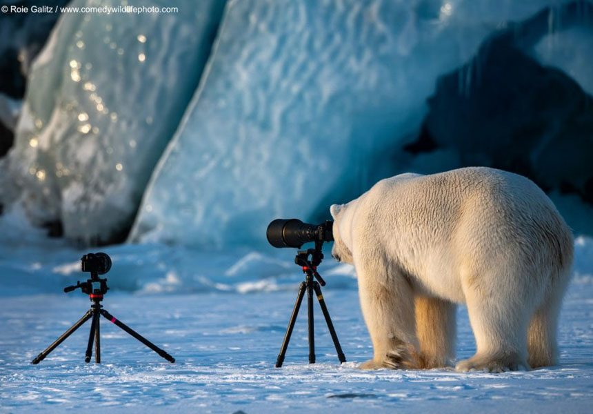 The 2018 Comedy Wildlife Photography Awards